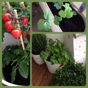 …bepflanzen wir unseren Balkon