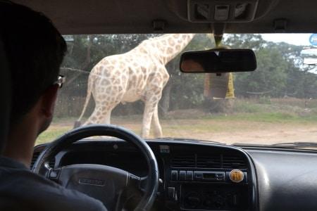 Autosafari chapin (38)