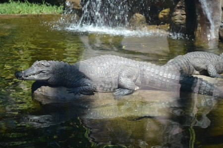 Zoo Aurora Guatemala (10)