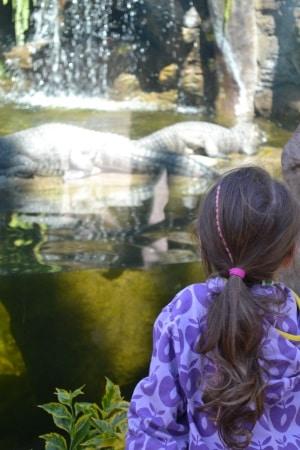 Zoo Aurora Guatemala (11)