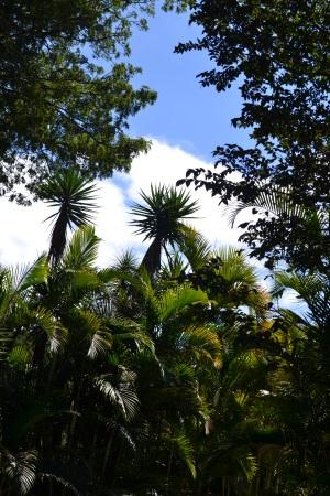 Zoo Aurora Guatemala (16)