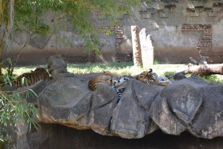 Zoo Aurora Guatemala (18)