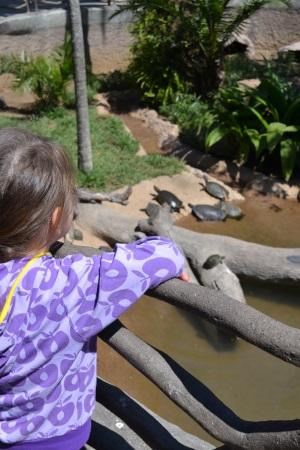 Zoo Aurora Guatemala (19)