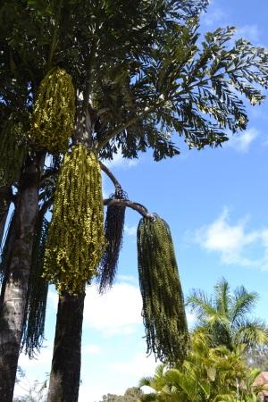 Zoo Aurora Guatemala (2)