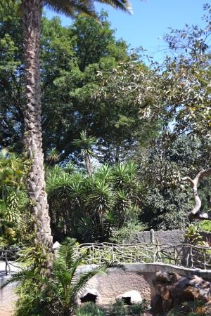 Zoo Aurora Guatemala (20)