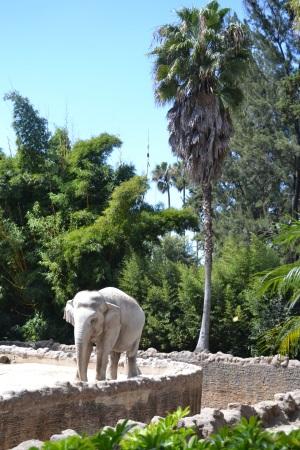 Zoo Aurora Guatemala (23)
