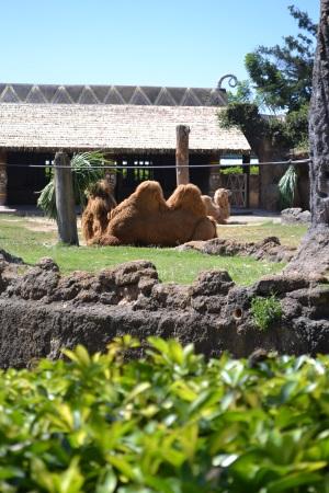 Zoo Aurora Guatemala (24)