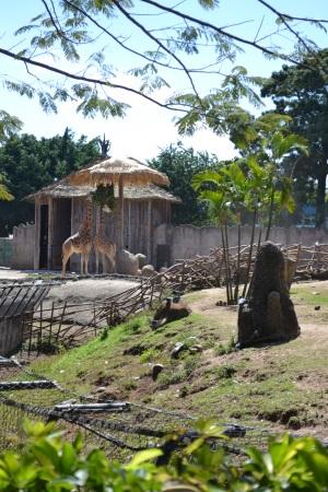 Zoo Aurora Guatemala (25)