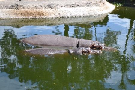 Zoo Aurora Guatemala (26)