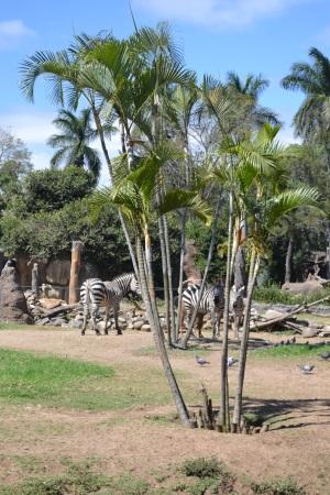 Zoo Aurora Guatemala (27)