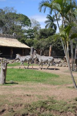 Zoo Aurora Guatemala (28)