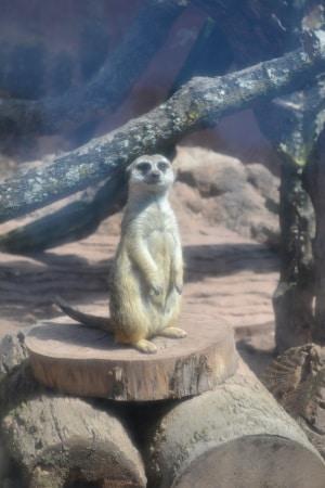 Zoo Aurora Guatemala (7)