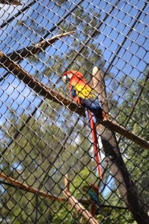 Zoo Aurora Guatemala (8)