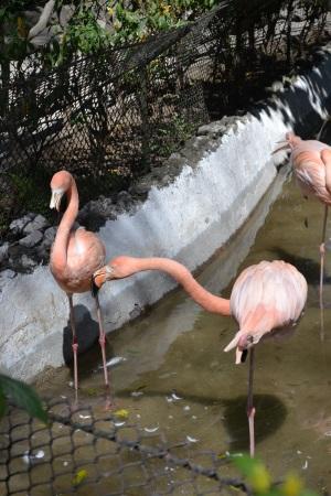 Zoo Aurora Guatemala (9)